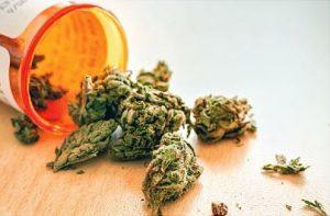 raw green marijuana