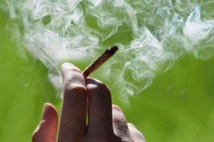 a regular marijuana smoker